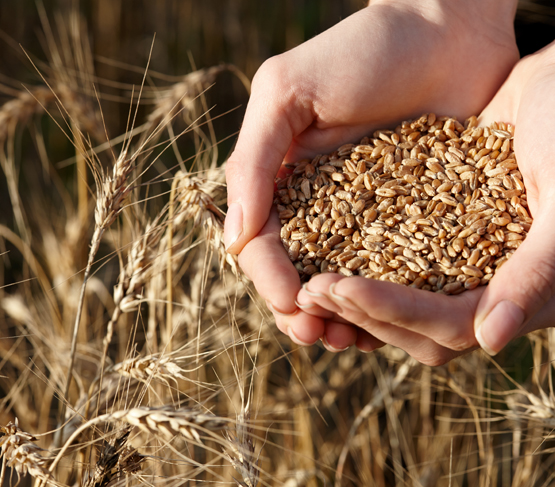seeds in farmers hands